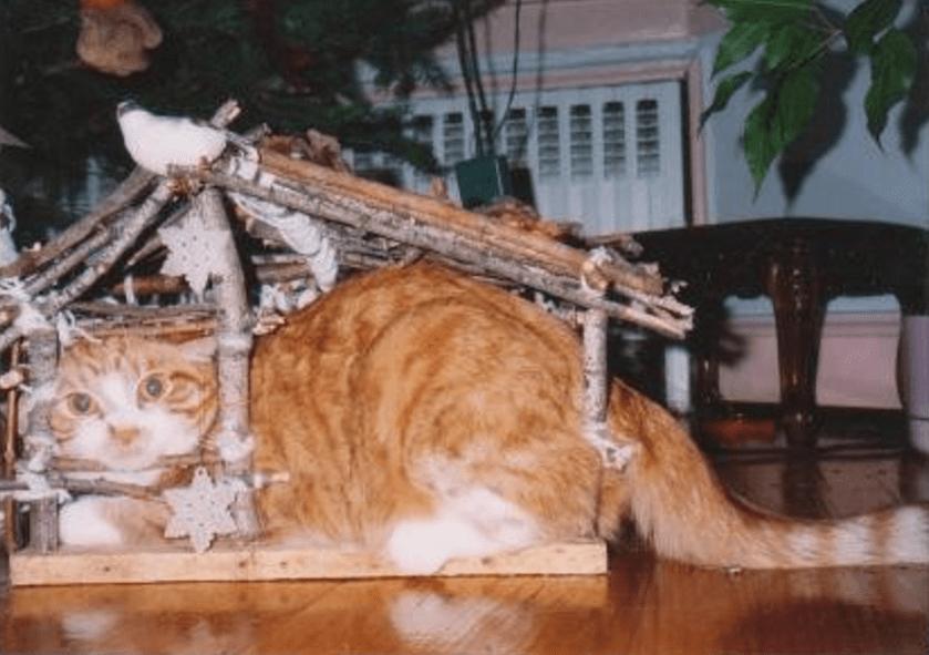 cat-christmas-decoration
