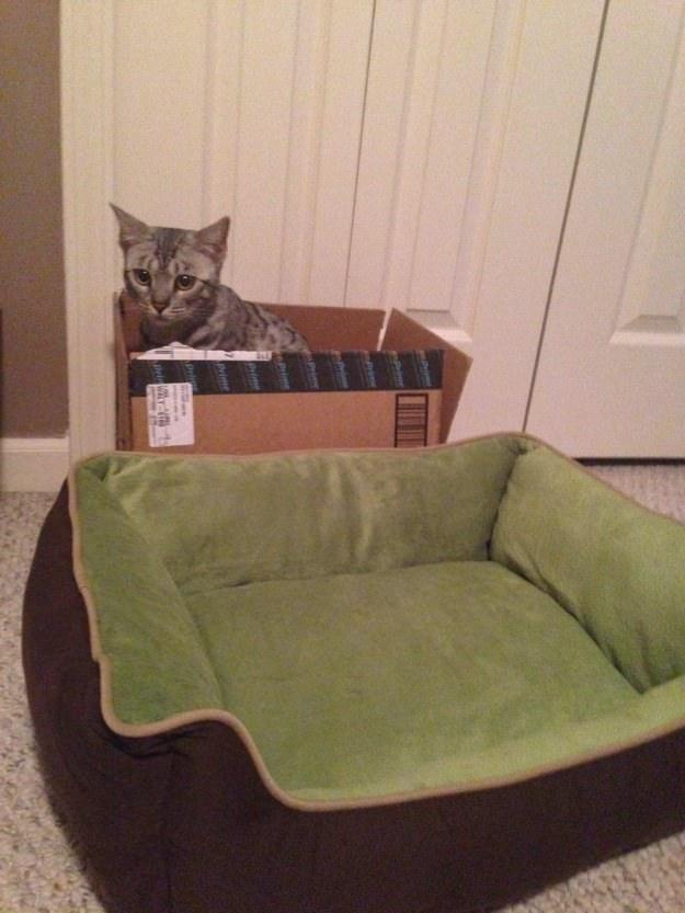 cat-in-box