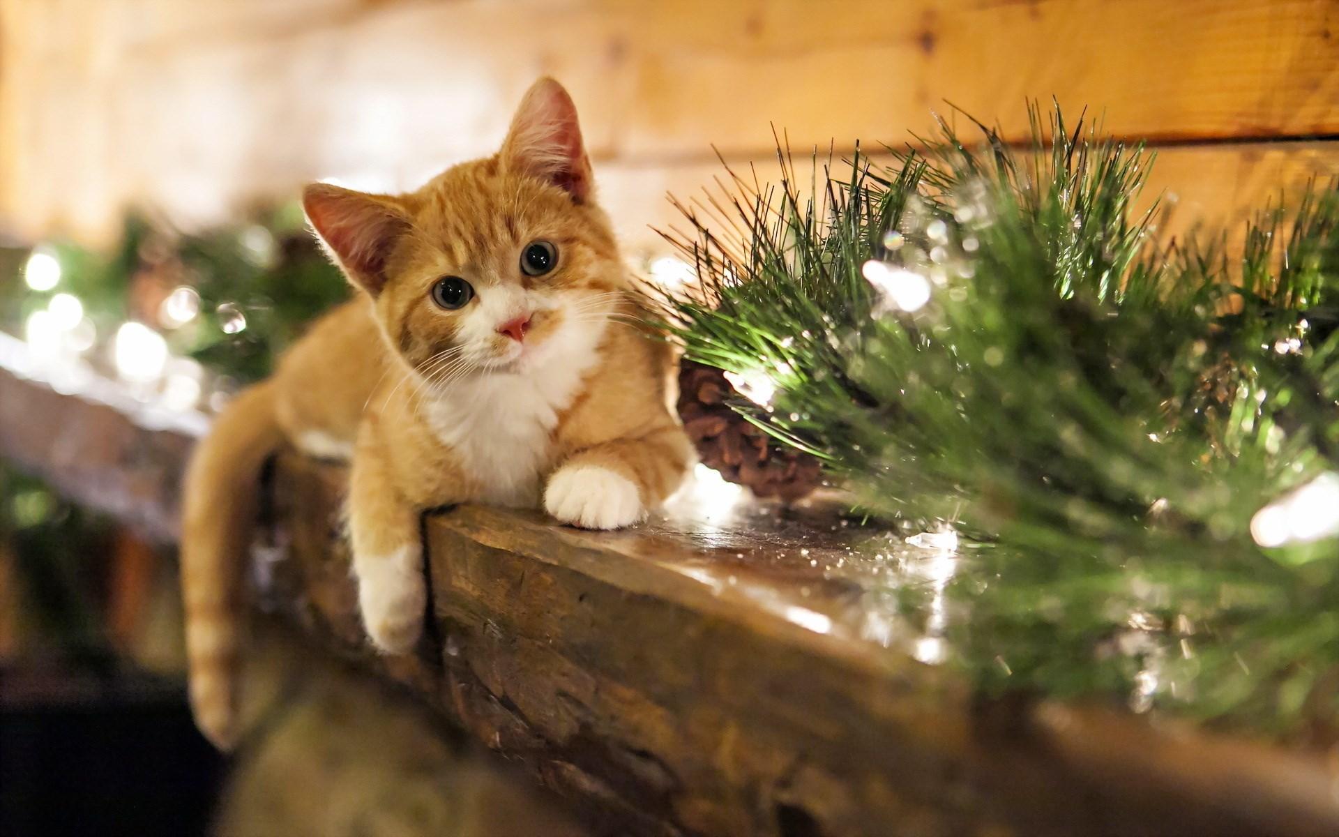 cat-lighting