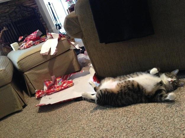cat-opens-presents