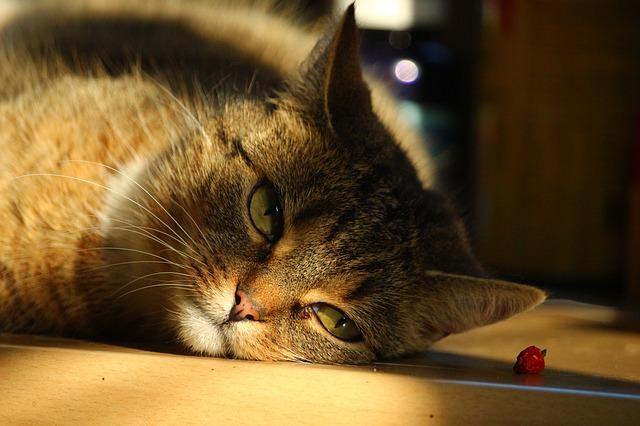 cat sun patch