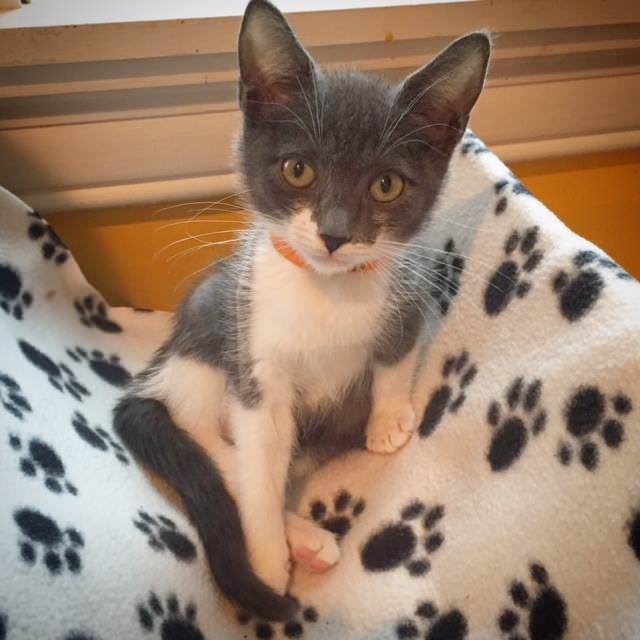 Gunnison, one of the kittens rescued that night. Image source: Kitty Bungalow