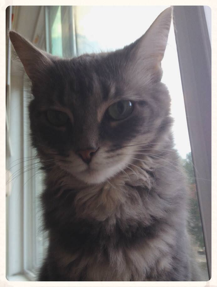 My triangle-faced cat, Ida.