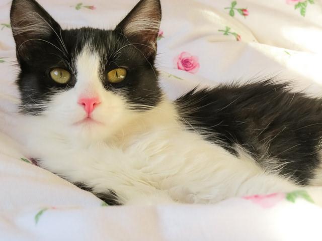 Cat With Long Term Diarrhea