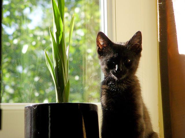 Does Your Cat Eat Houseplants? Here's Why (Plus Safety Tips) Houseplants For Cats To Eat on cat fossil, cat grass, cat climber, cat border, cat vine, cat yellow, cat vase, cat cactus, cat poinsettia,