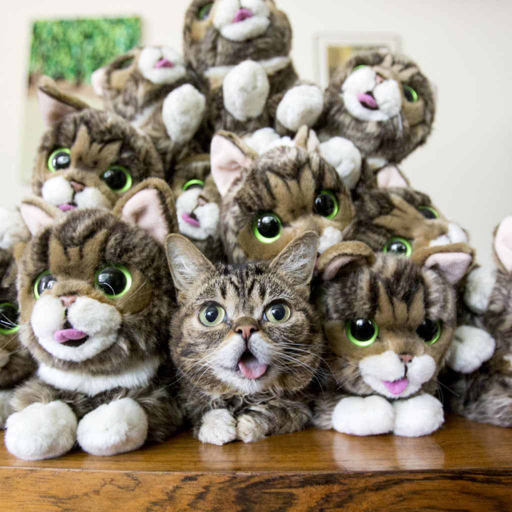 Image source: Lil BUB