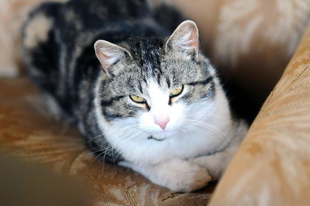 animal-eyes-cat-mean