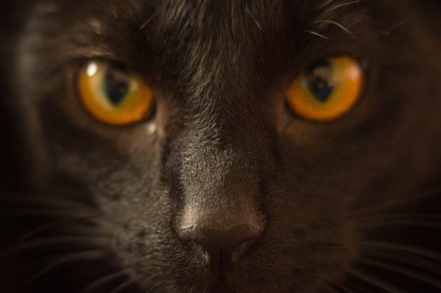 animal-pet-eyes-cat