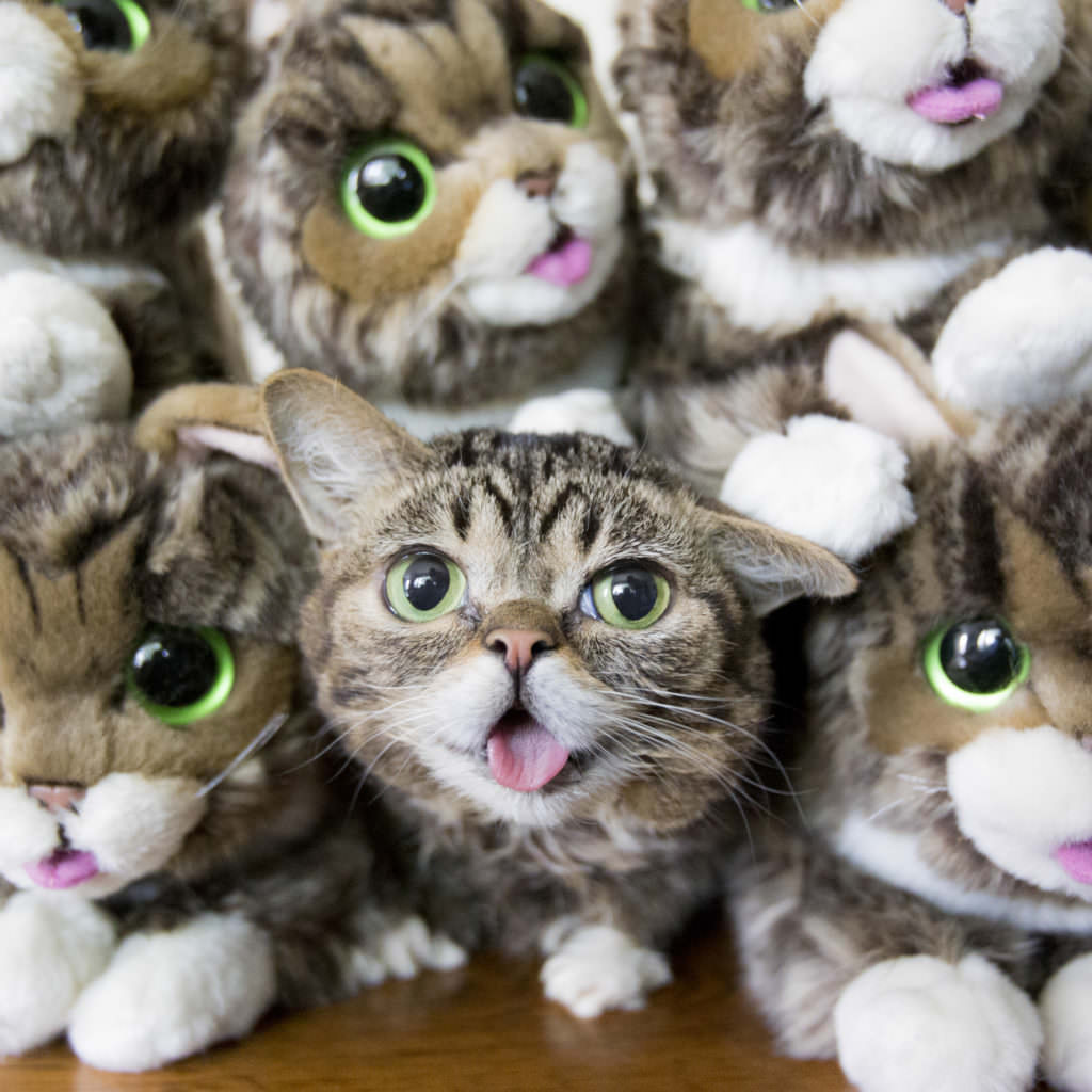 Image source: Lil BUB / Mike Bridavsky