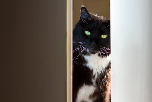 Ask A Vet: Why Does My Cat Follow Me To The Bathroom?