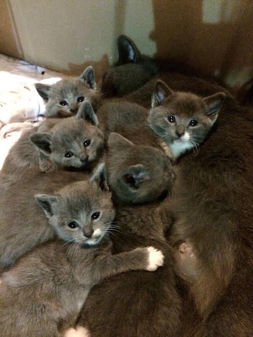 1 kitty bunch