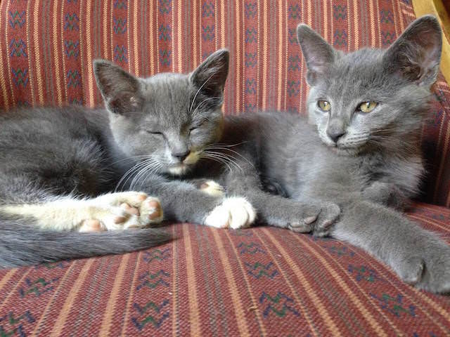 10 - kitties