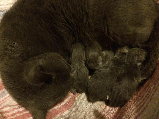 4 kitten bunch