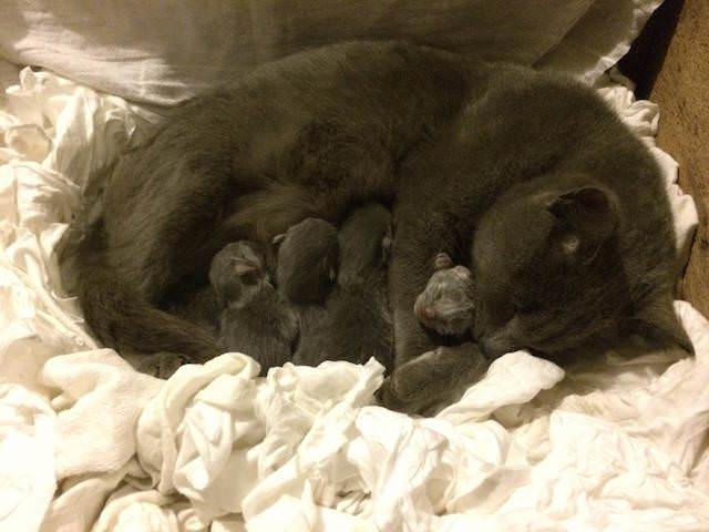 6 kitten bunch