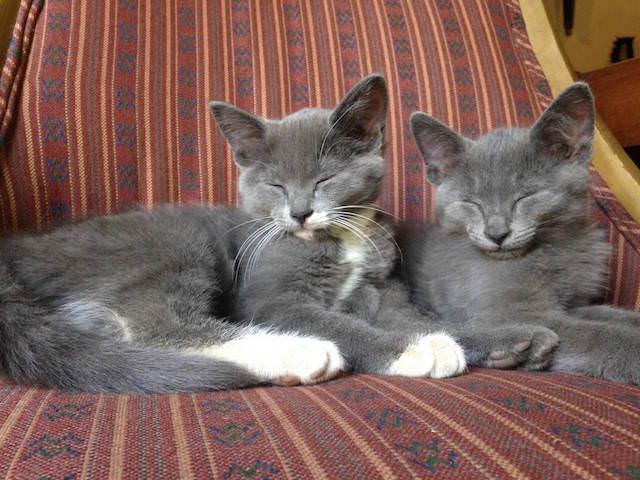 8 sleepy kitties