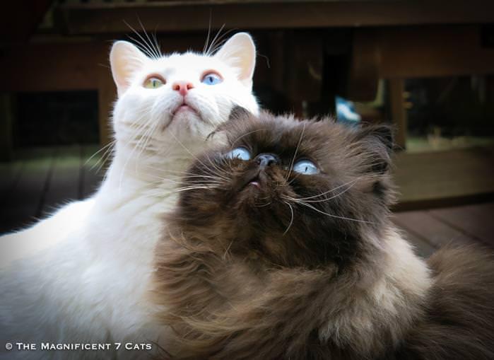 Junior and Tom iheartcats 8 Feb 16