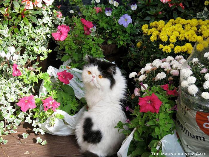 Norman flowers iheartcats 8 Feb 16
