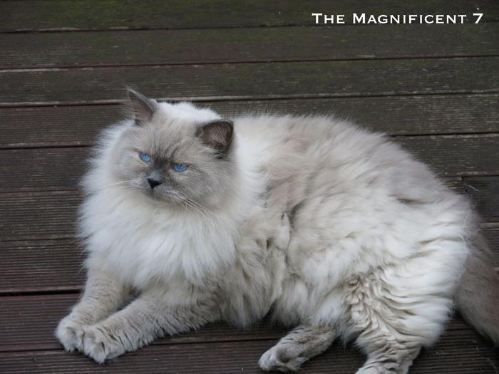 Prince iheartcats 8 Feb 16