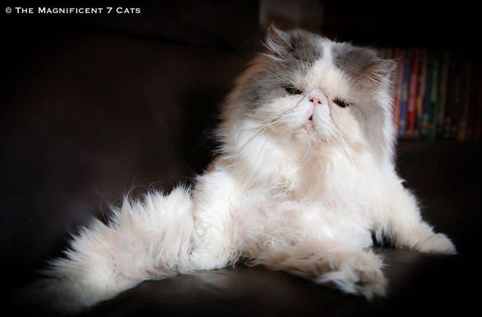 Ugs fluffy iheartcats 8 Feb 16