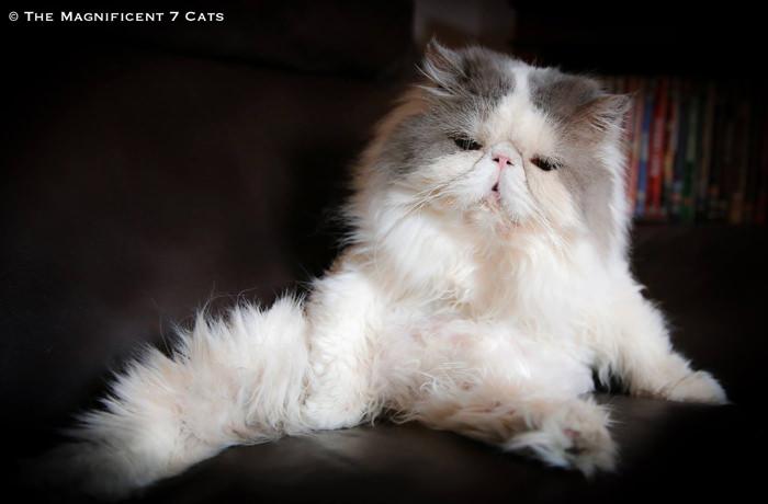 Ugs fluffy iheartcats 8 Feb 16