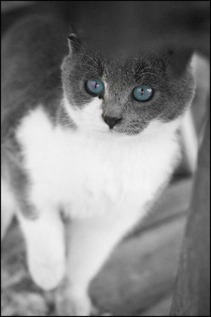 cat-22145_1280