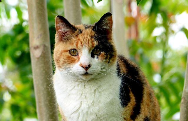cat-794452_640