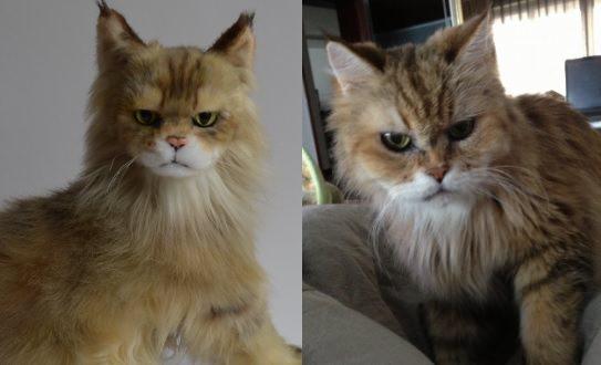 cuddle-clone-cats-1