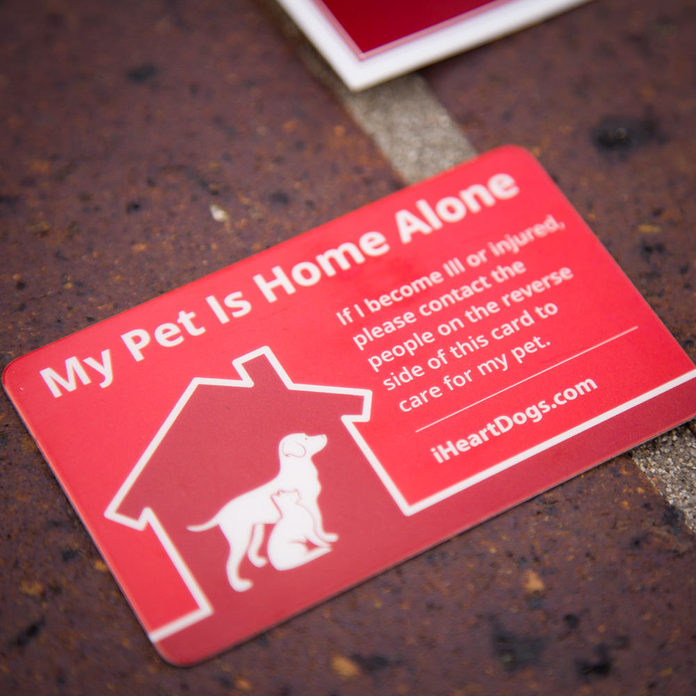 Excellent 2 Pack My Pet Is Home Alone Wallet Cards Beutiful Home Inspiration Aditmahrainfo