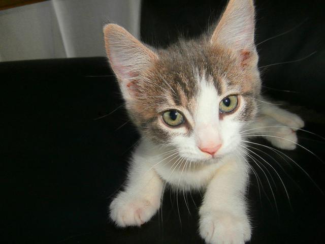 choosing a kitten personality