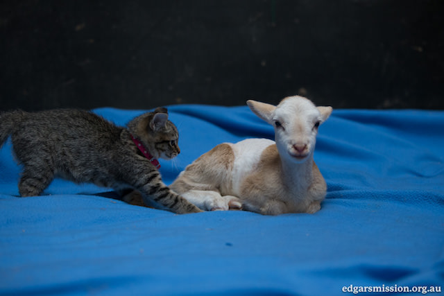 Fifi and Kittens 1