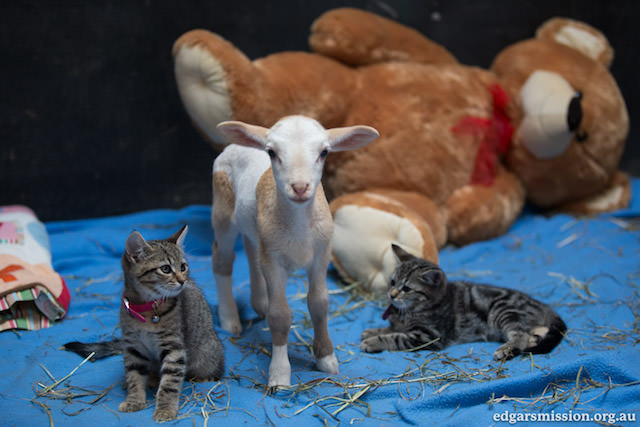 Fifi and Kittens 2