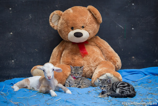 Fifi and Kittens 4