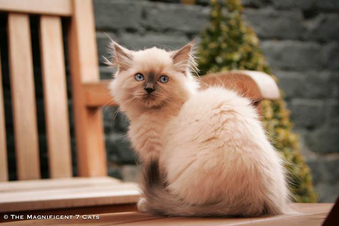 Magnificats iheart 2 Mar 2016 Pixie baby