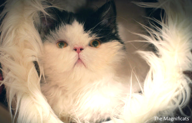 Norman Baby iheartcats 8 Mar 16