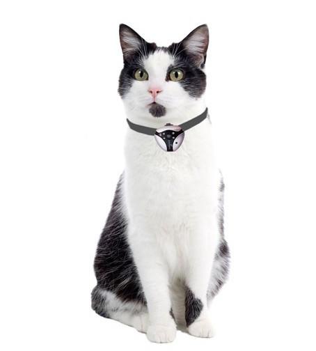 cat-videocam