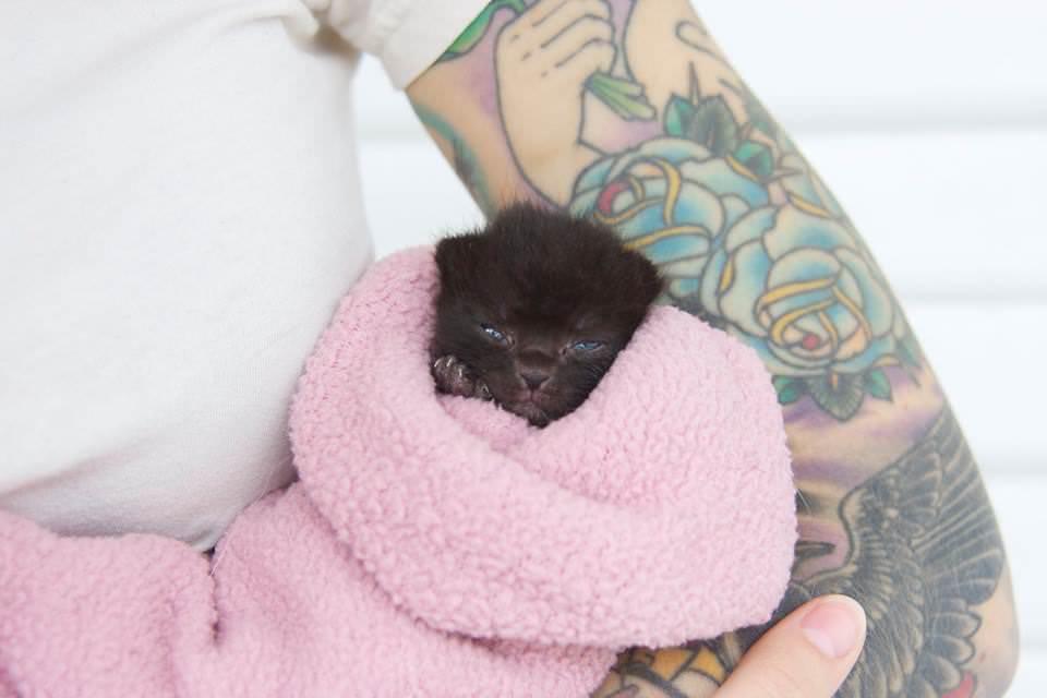 Kitten Lady @ Facebook
