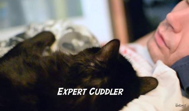 Cats Make The Best Alarm Clocks Youtube