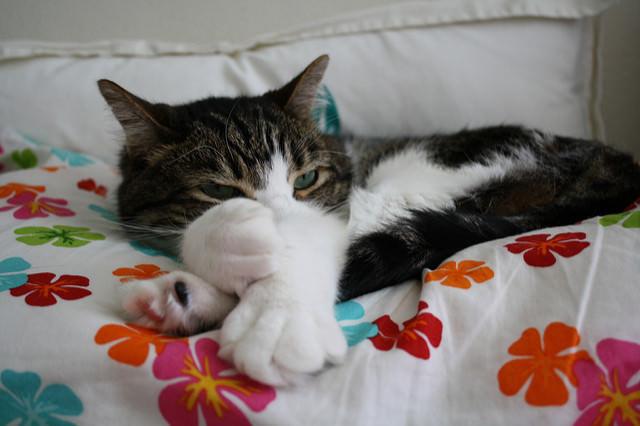 cat bed 3