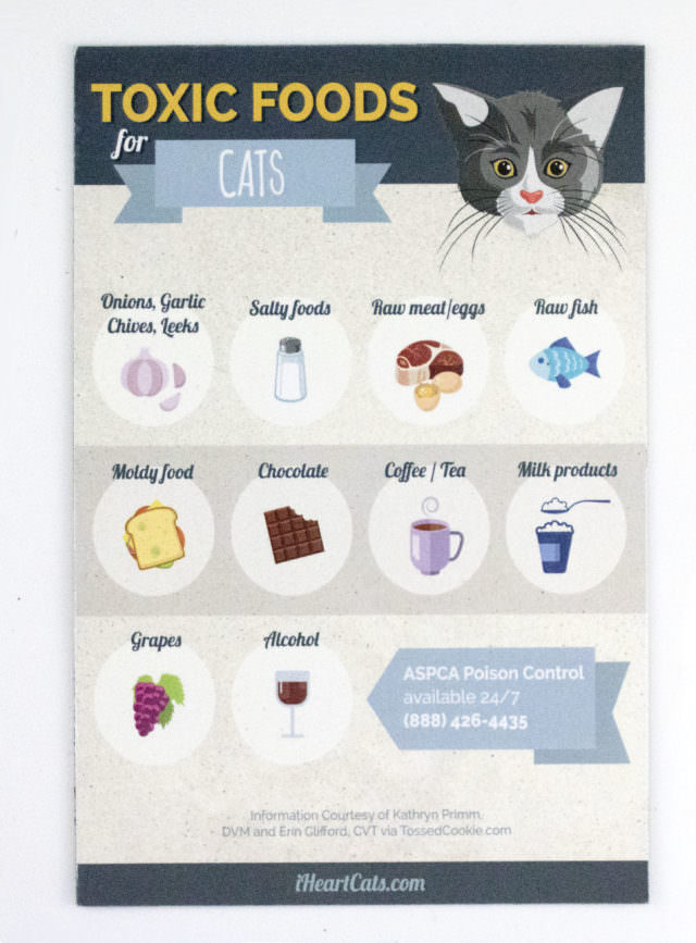What Food Is Toxic To Dogs And Cats