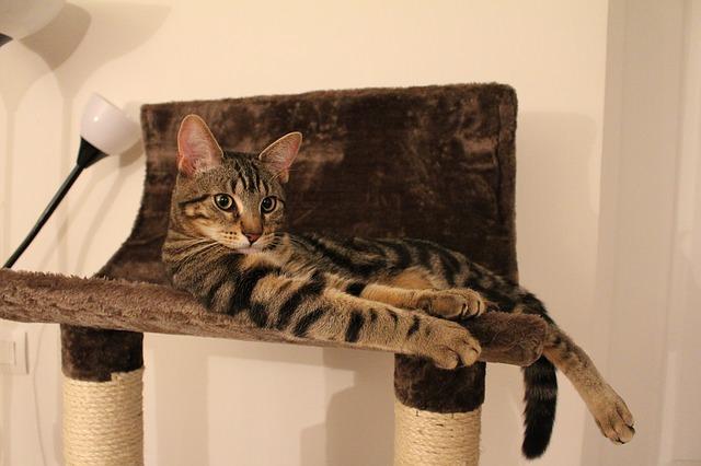 c9 cat-1160719_640