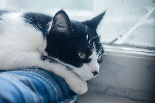 Do Cats Help with Depression and Anxiety? - Fluffy Kitty