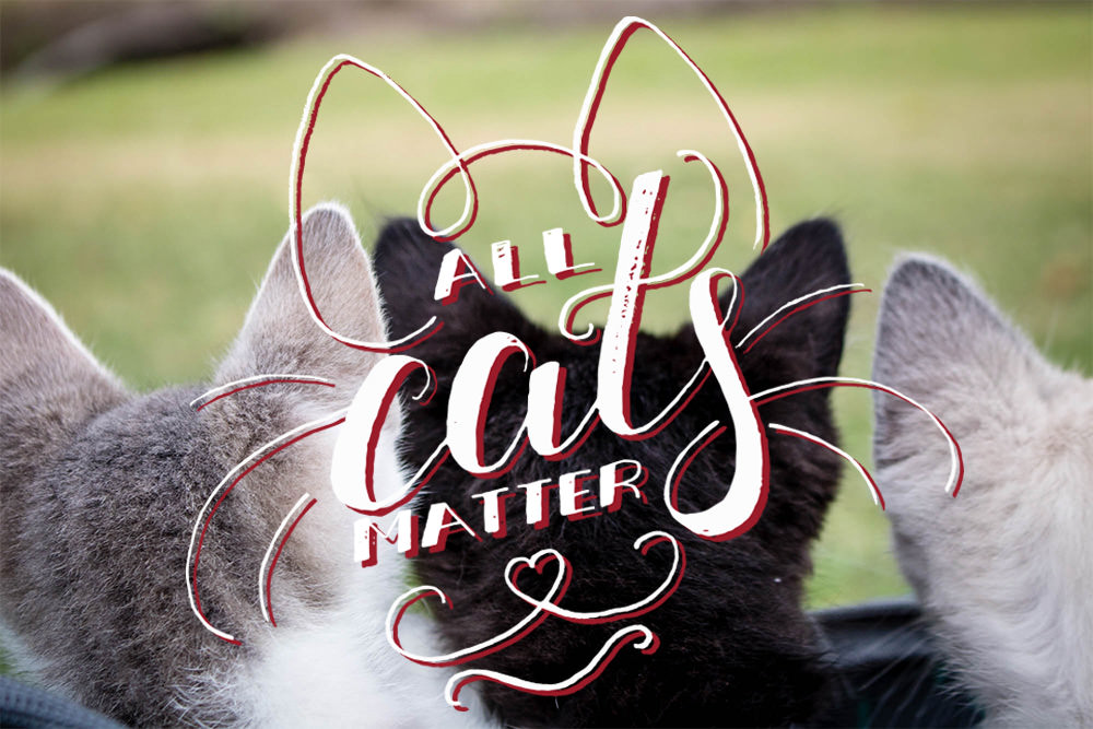 AllCatsMatter_Homepage_FeaturedImages