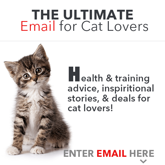 The Ultimate Email for Cat Lovers!