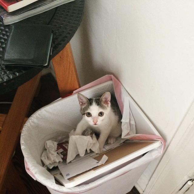 Kitten 9