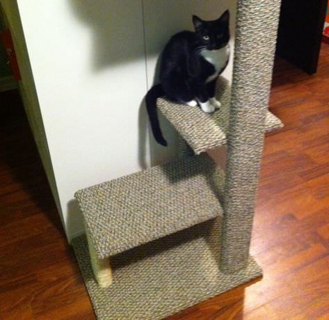 5 fun diy perches your cat will love. Black Bedroom Furniture Sets. Home Design Ideas