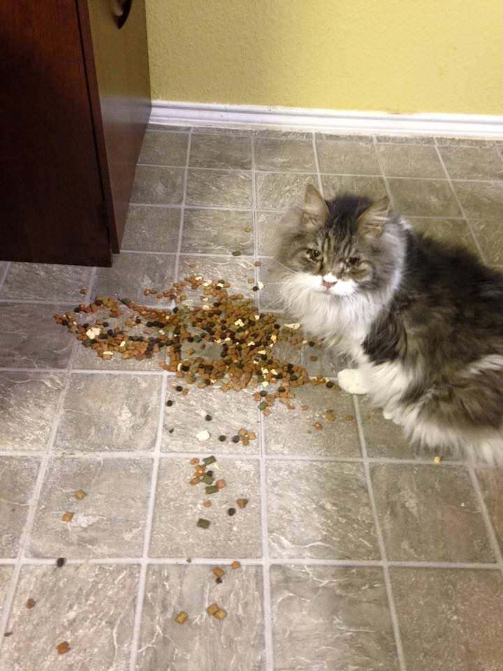Sometimes Lunchbox tries to slip back into her old habits. Like the time she broke the treat jar. Photo via Facebook