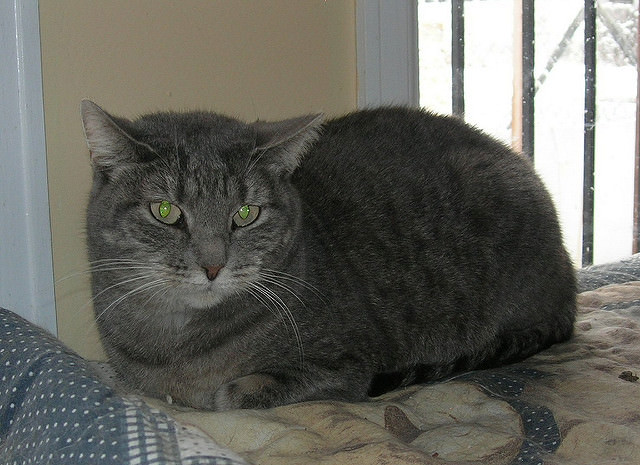 Image Source: Rocky Mountain Feline Rescue via Flickr
