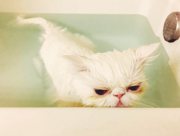 15 Tips For Bathing Your Cat