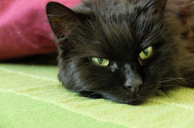 cat-481567_640