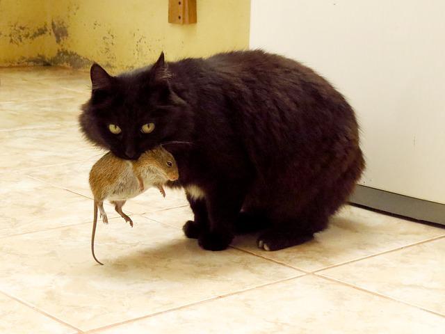 cat-965971_640